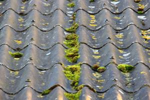 asbest bølgeeternit